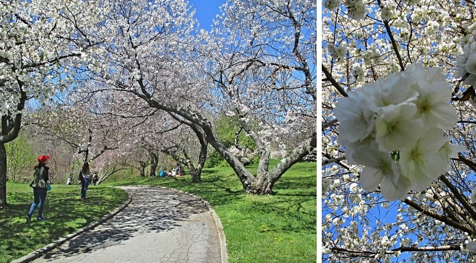 Bronx Botanical garden 1 (1)