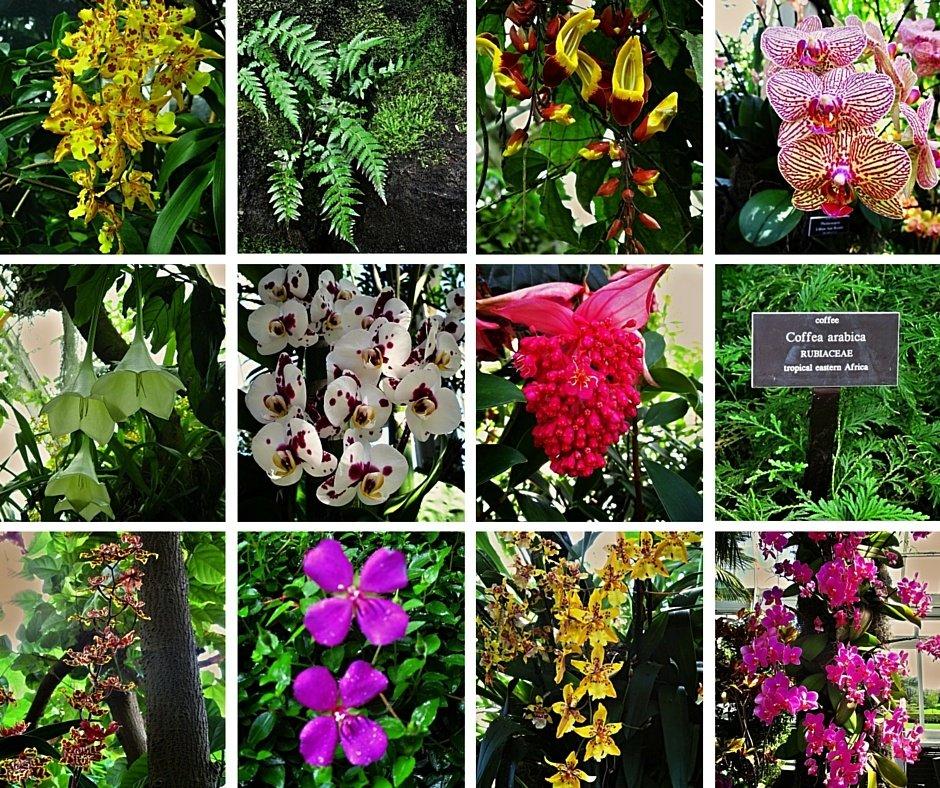 Bronx Botanical garden 1 (6)
