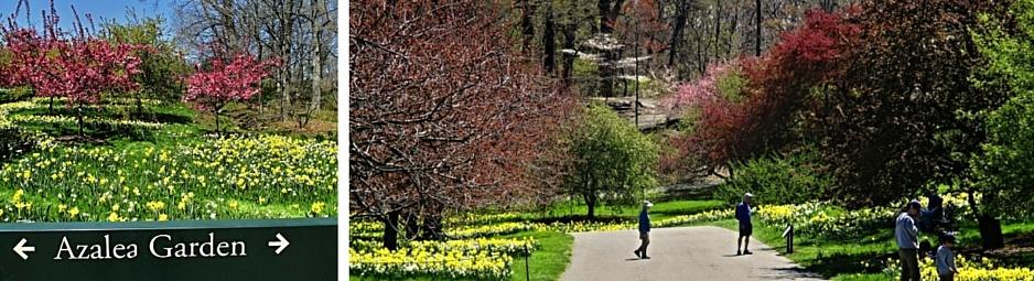 Bronx Botanical garden 2 (1)